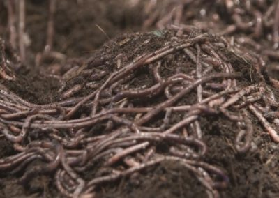 Block Farming & Vermi Composting